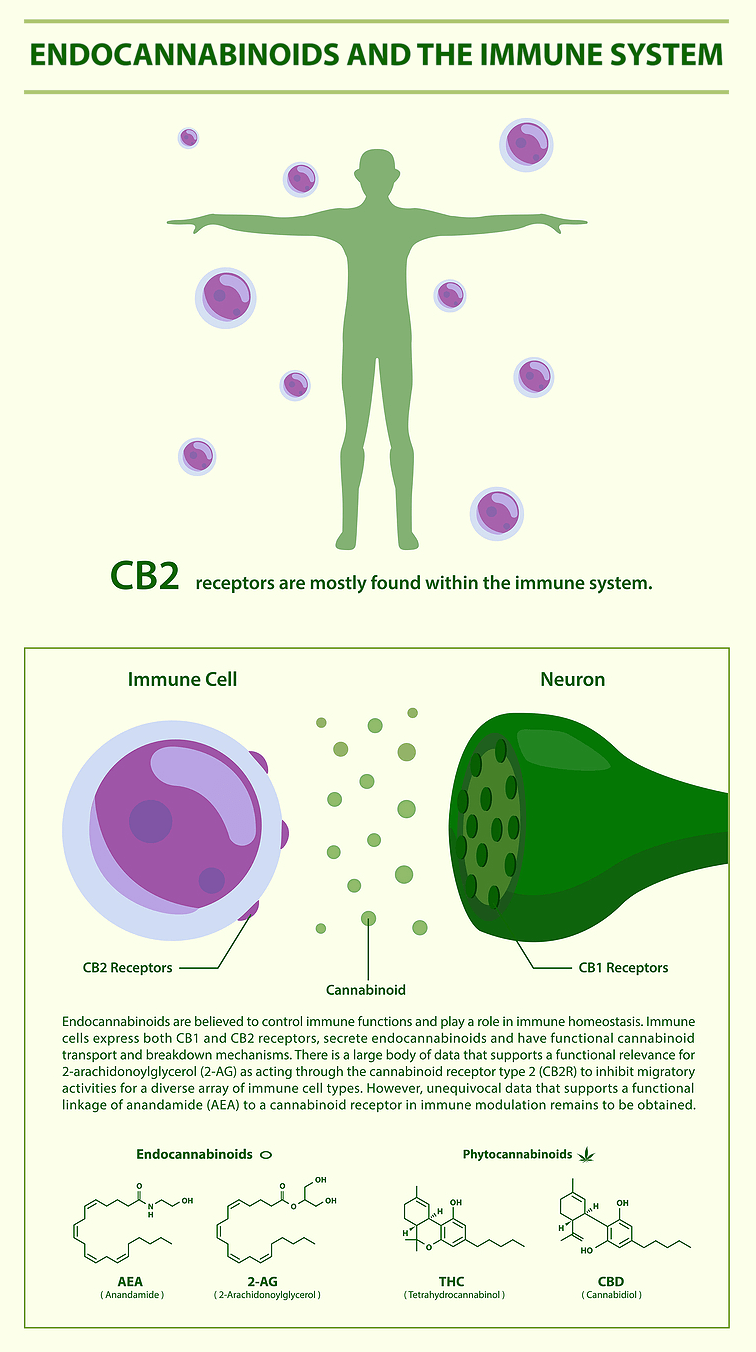 Endocannabinoids and the Immune System
