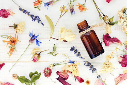 a selection of flowers and herbal ingredients for many popular Essential Oils
