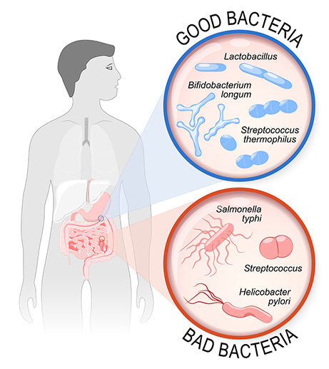 Good vs Bad Gut Bacteria