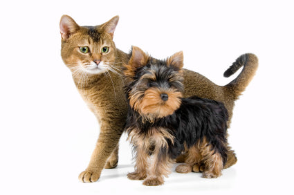 Healthy Pets - Cat & a Small Dog