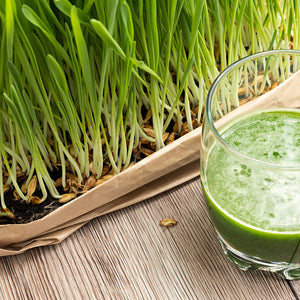 Barley Grass and Juice