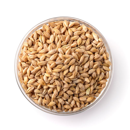 Barley Seeds in Bowl