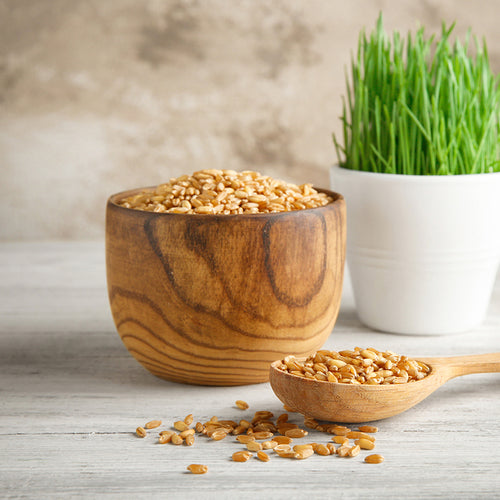 Organic Wheatgrass Seeds