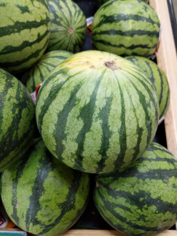 Trader Joe's Mini Watermelons