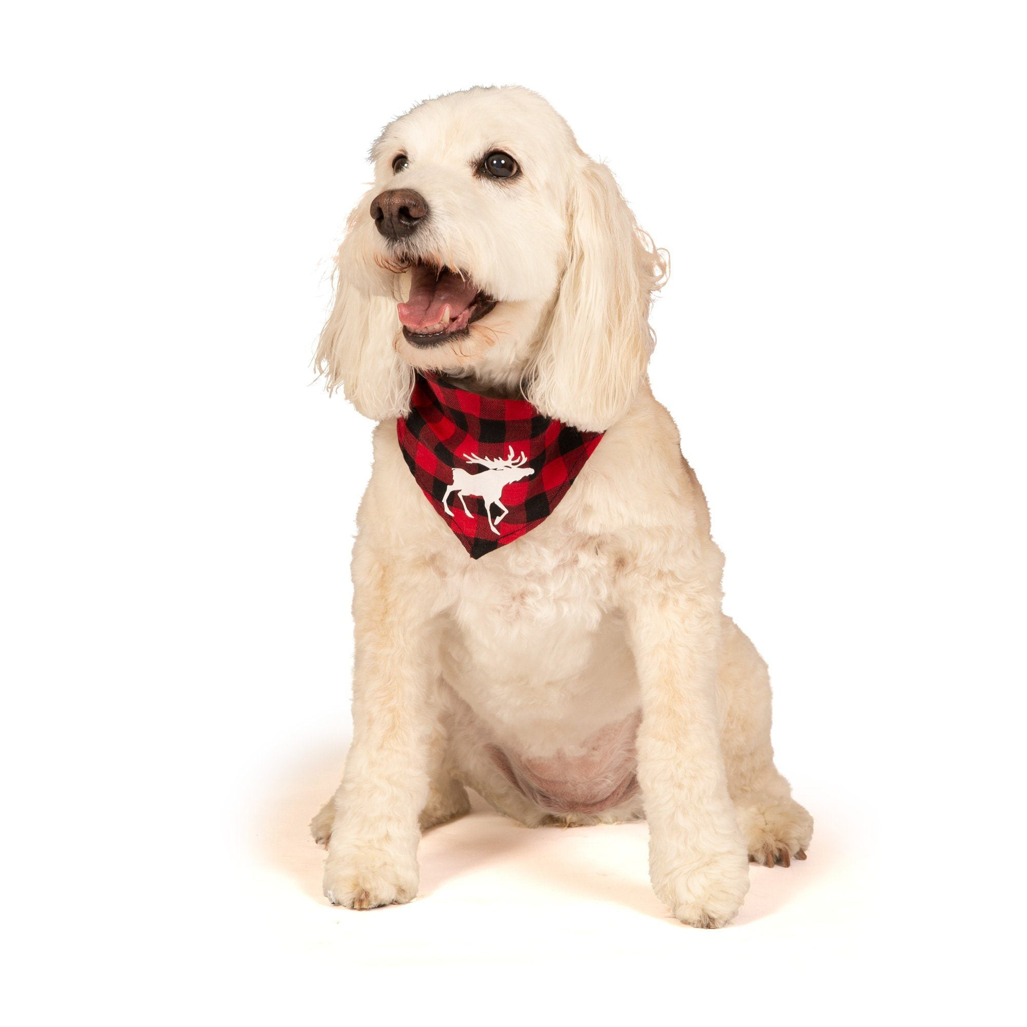 red and black plaid bandana for dogs matches family pjs