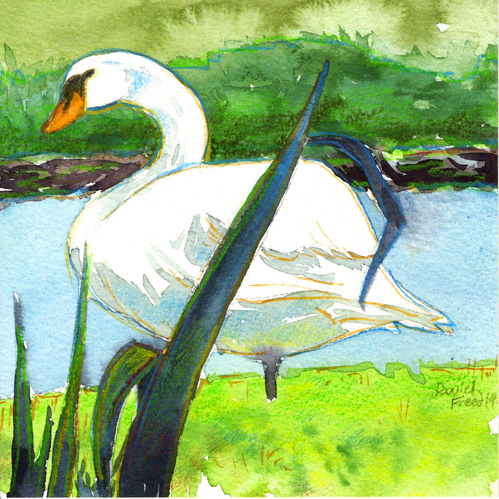The Swan at Springbrook Farm