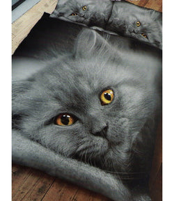 Grey Kitten Cat Double to Queen Quilt Cover Set