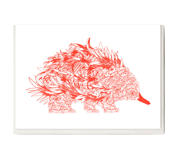 New! Fluro Echidna Greeting Card