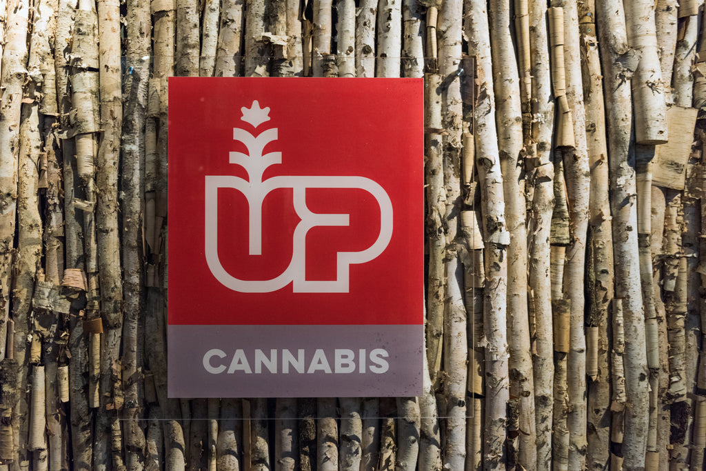 The Up Cannabis logo on a birch-tree lined wall.