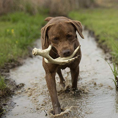 Antler Chew Toy