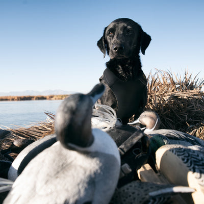 Browning 5mm Neoprene Dog Vests | MO Shadow Grass Blades