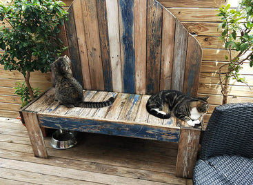 CATS TO THE RESCUE AT THE THE CAT CUDDLE CAFÉ