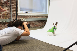 Photographing Fido: Tips for Taking Great Pictures of Your Dog