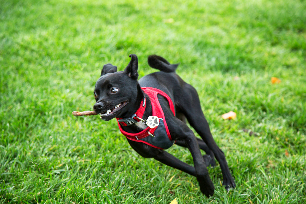 Fetch With Fido: How to Know When Your Dog Gets Too Much Exercise