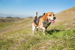 5 Ways to Exercise with Your Pup
