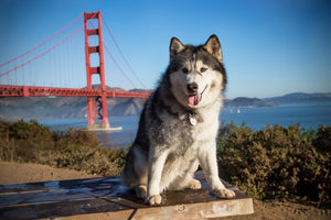 18 Cool Things to Do in San Francisco with Your Dog