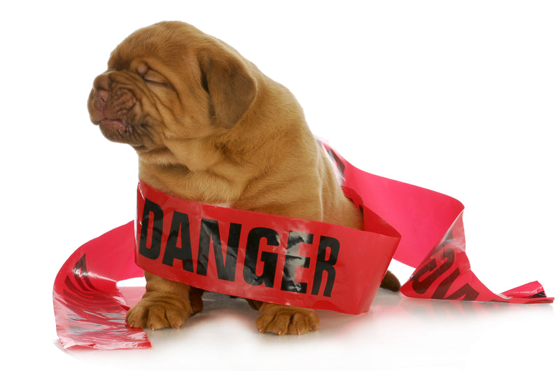 Common Households Threats Endangering Your Pet's Health