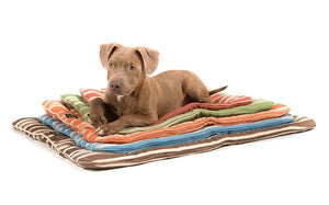 What to Buy for a New Dog? Six Puppy Essentials
