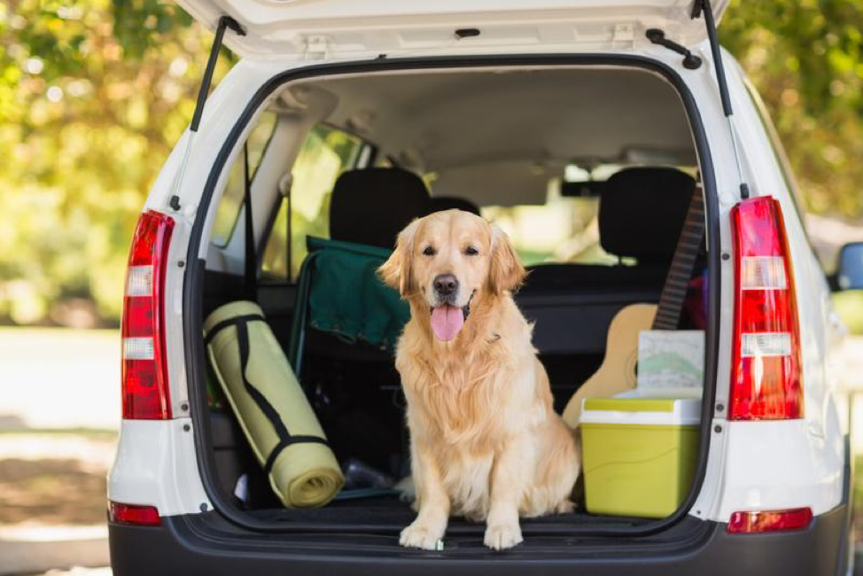 Pets and Travel: How to Keep the Car Clean Along the Way