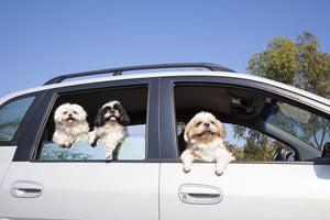 5 Ways to Keep Your Pet Calm During Long Road Trips