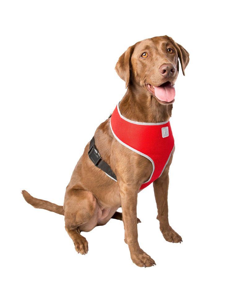 SimplyDog Adjustable T-Strap Body Harness