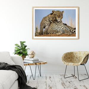 Mother and cub leopard... for the love of play - Bells Fine Art