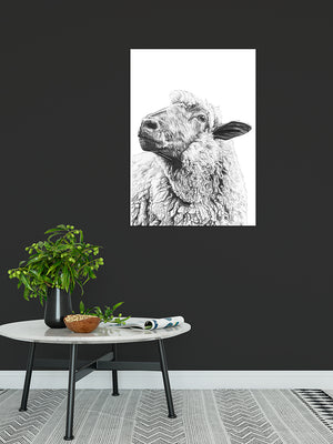 Sheep of Yass - Bells Fine Art