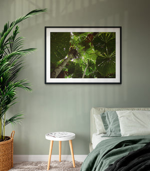 Daintree Rainforest canopy | Limited Edition - Bells Fine Art