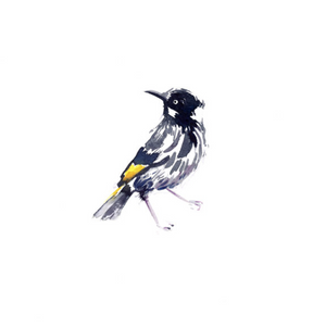 New Holland Honeyeater | Limited Edition - Bells Fine Art