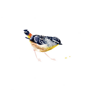 Spotted Pardalote | Limited Edition - Bells Fine Art