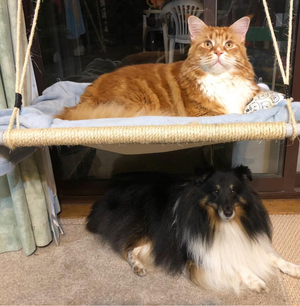Lazy Cat Laze About Xlarge Omar Maine Coon Hammock