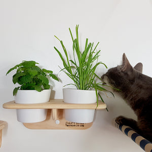 Lazy cat Plant pot holder catnip cat grass Purrkour