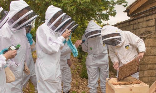 BOOKING: Beekeeper for a Day Gift Experience