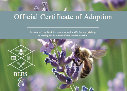 Bees & Co. - Adopt a Bee Gift Set