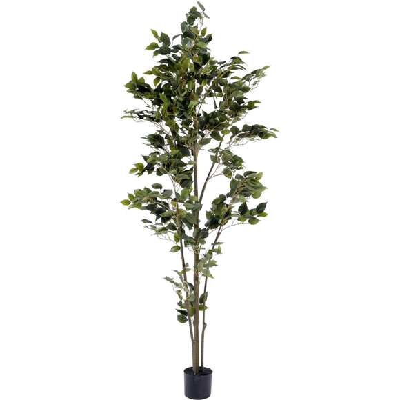 Faux Weeping Fig Tree - 182cm