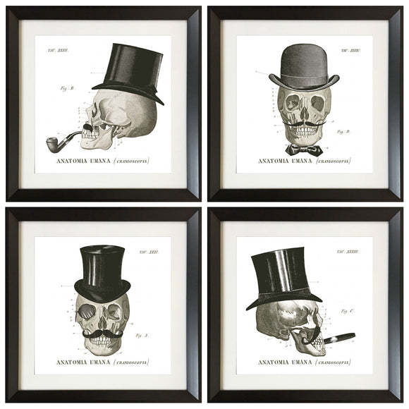 Set of 4 Framed Skull Illustrations