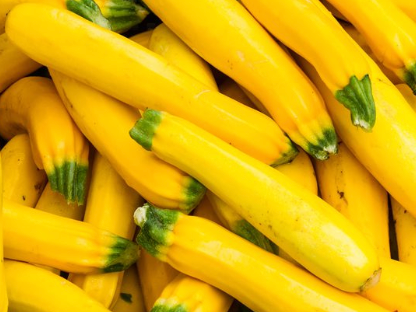 Yellow Squash (med)