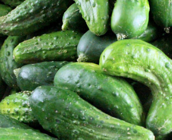 Organic Pickling Cucumbers (20 lbs - 2nds)
