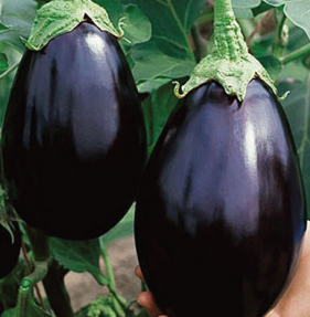 Eggplant Black Beauty - each