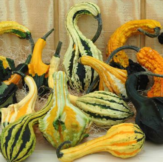 Wing Gourds - Qty 2