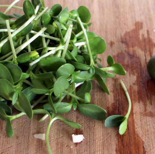 Sunflower Shoots / Microgreens 1oz