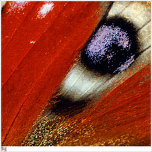Square Silk Scarf, Wearable art inspired by nature, Closeup of Peacock Butterfly, Crimson with a single eye of black on white with a purple tinge