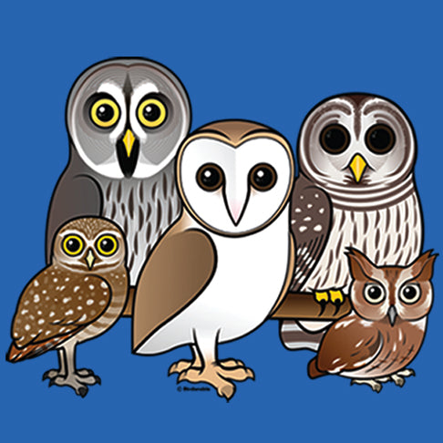 5 Owls - artwork of 5 owls on royal blue background