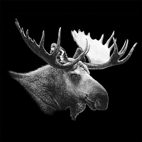 Moose Portrait - painting of a white moose on a black background