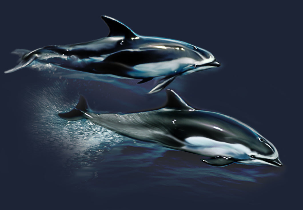 Pacific Dolphins- artwork featuring two dolphins swimming at the water surface