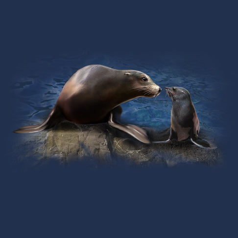 Sea Lion Smooch by Robert Campbell - painting of a mom and baby sea lion smooching