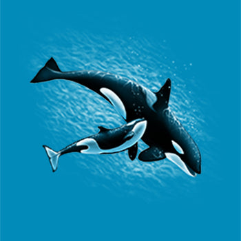 Mom & Baby Orca by Eric Blais - painting of mom & baby orca swimming together