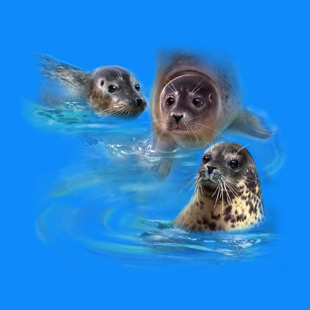 Harbour Seals by Robert Campbell - painting of 3 harbour seals swimming