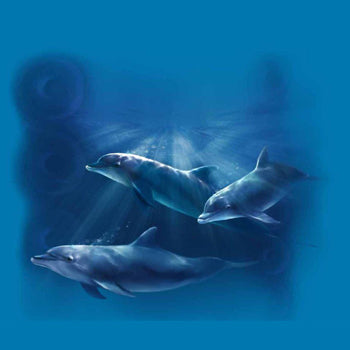 Spotlit Dolphins by Robert Campbell - painting of three dolphins swimming