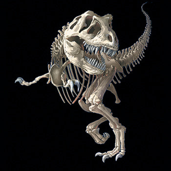 T-Bone - painting of a t-rex dinosaur skeleton